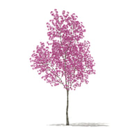 red lapacho tree tabebuia 3D model