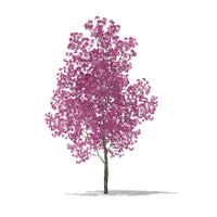 3D red lapacho tree tabebuia model