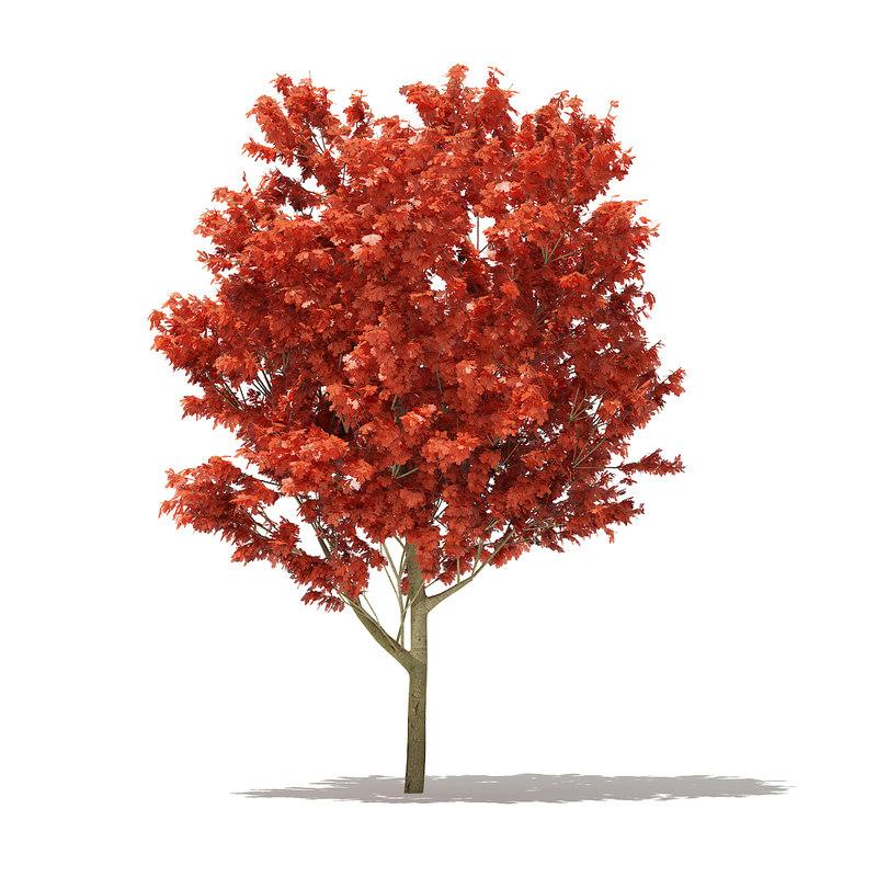 red oak tree quercus 3D model