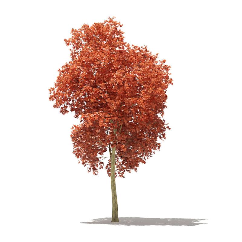 3D red oak tree quercus