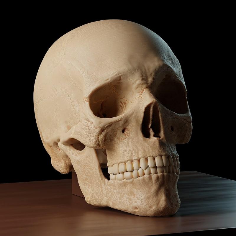 3D accurate human skull model