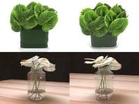 anthuriums smallaccents 3D model