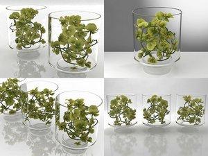 3D green orchid model