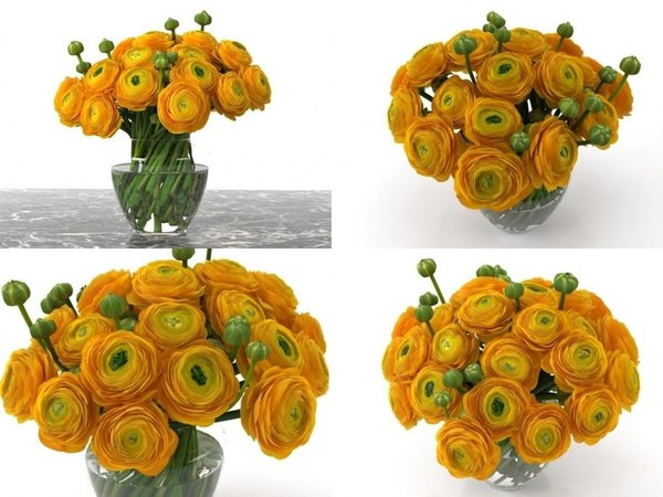 orange ranunculus 3D model