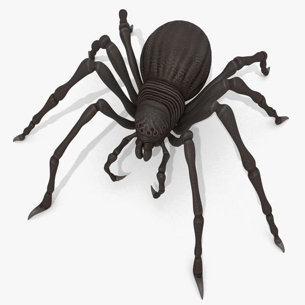 fantasy spider 3D