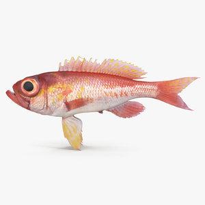 3D bigeye bass