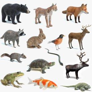 realistic animals 3D model