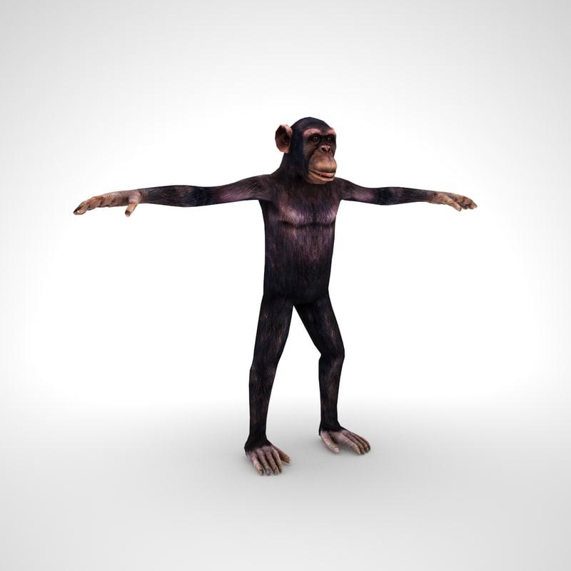 chimpanzee 3D