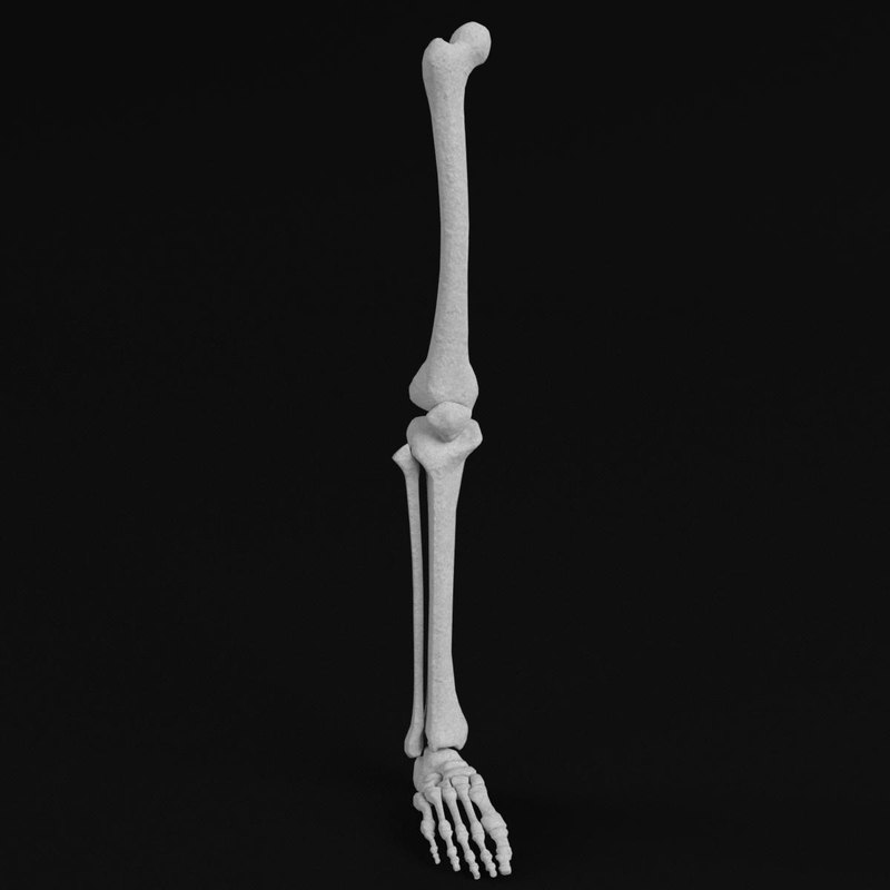 human leg foot bones 3D model