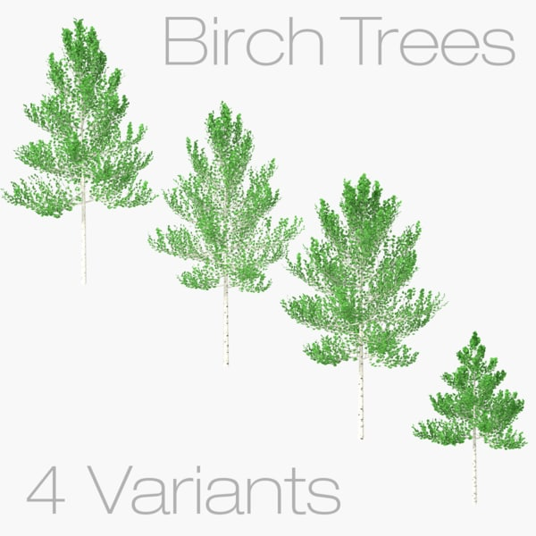 birch trees - 3D