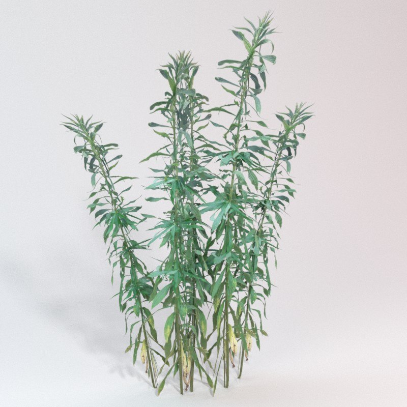 3D plant goldenrod model