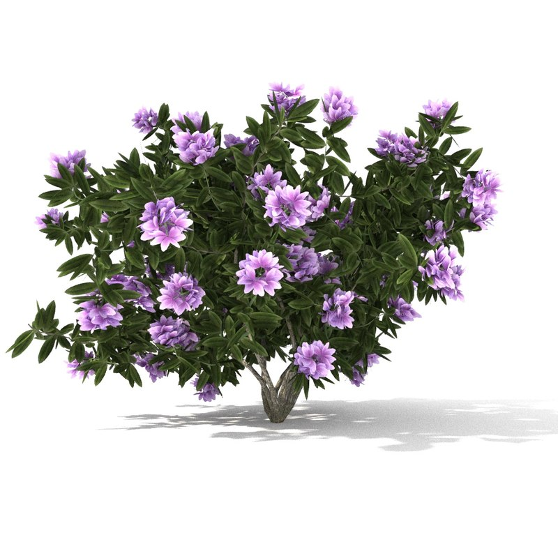 rhododendron 3D model