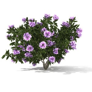 3D rhododendron