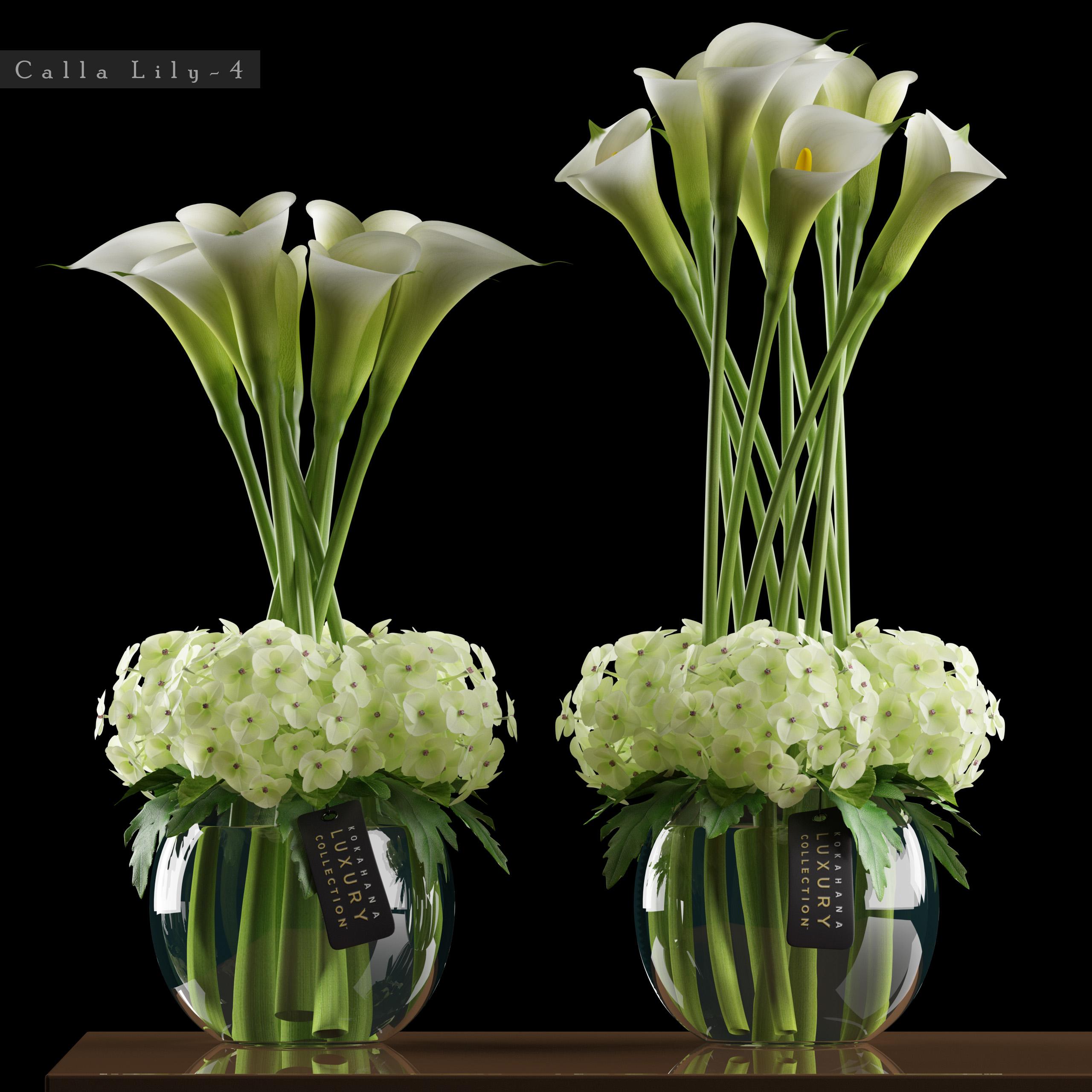 White Calla Lily Flowers 3d Model Turbosquid 1177234