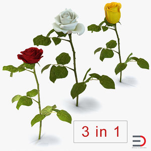3D roses 2