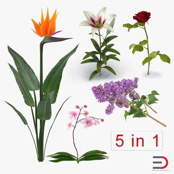 flowers 3 3D model