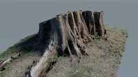 photo-scanned tree stump model