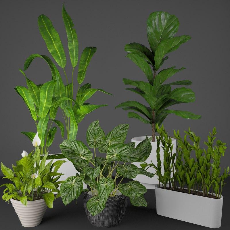 house plant set 3D model
