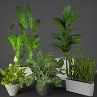 House plant set
