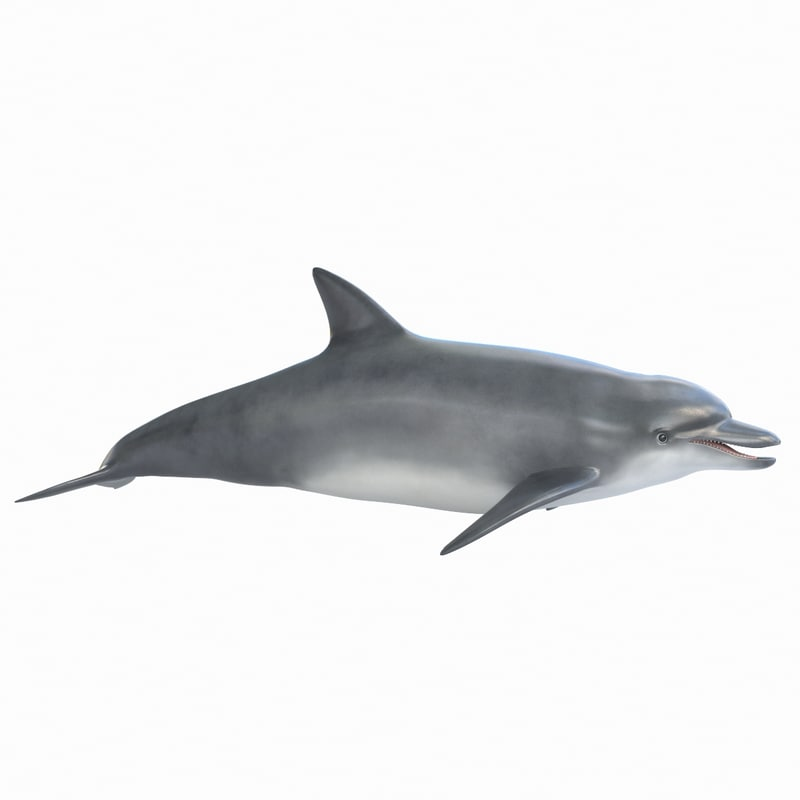dolphin realistic 3D model