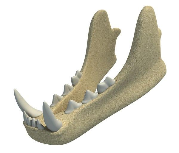 3D animal lower jaw mandible