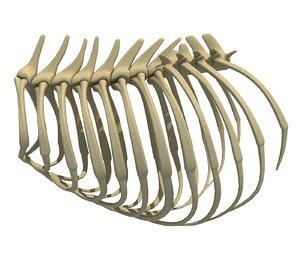 3D lion rib cage model