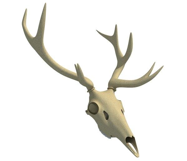 deer skull model