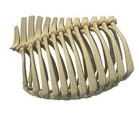 animal rib cage 3D