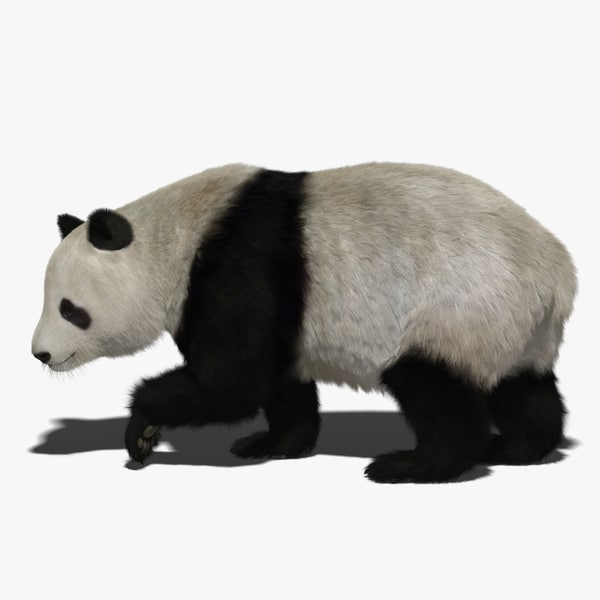 3D giant panda fur rigged