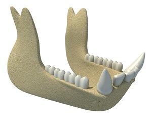 animal jaw 3D model