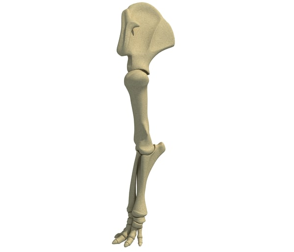3D animal leg skeleton