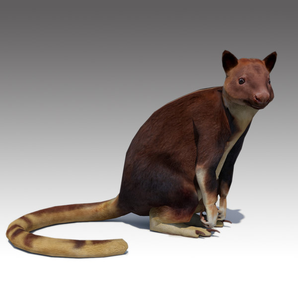 tree-kangaroo animations 3D model