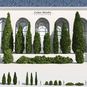 3D model cedar shrub
