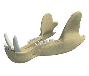 3D bear jaw model
