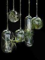 3D model hanging air plants