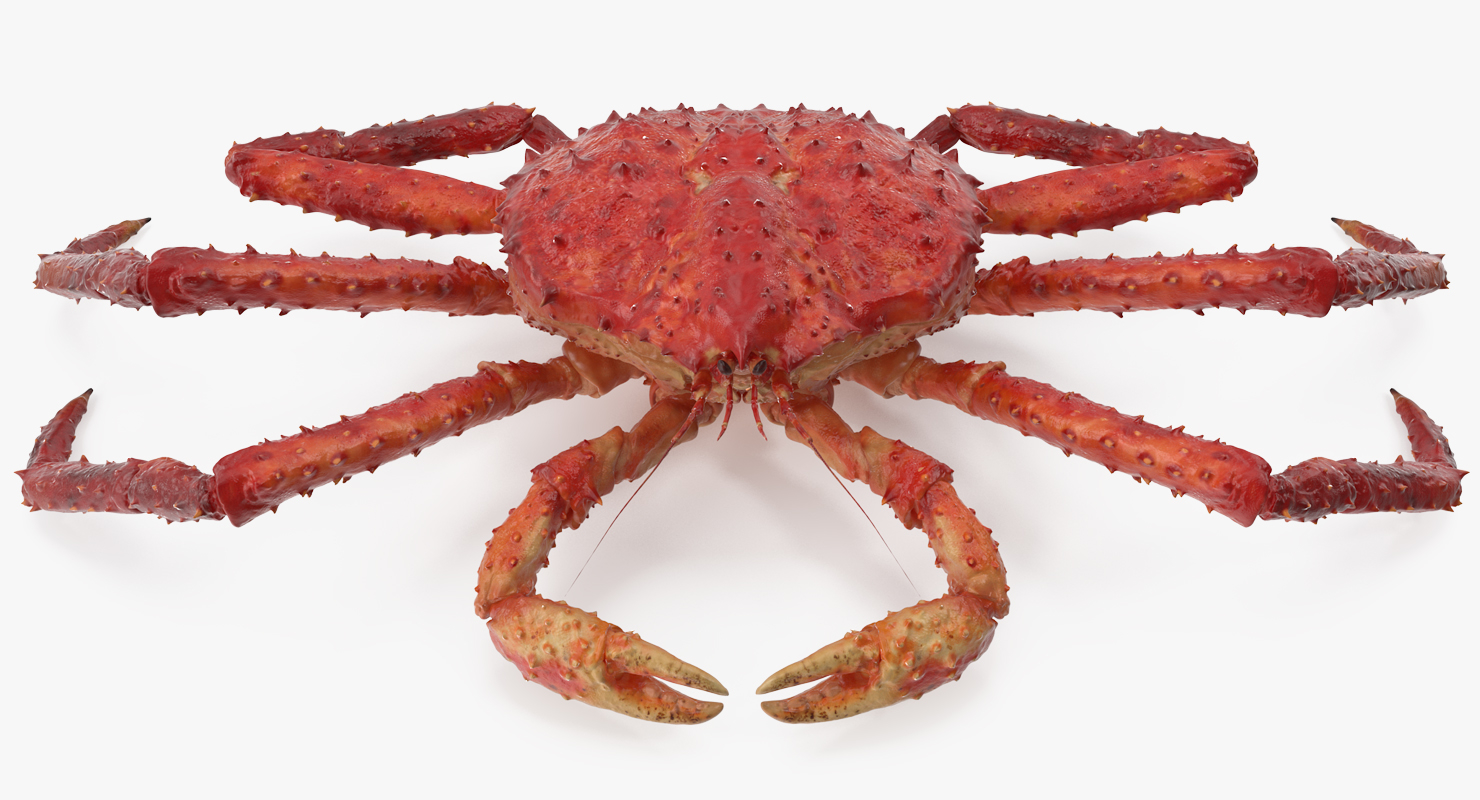 The Difference Between Red And Gold King Crab