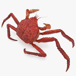 3D kamchatka crab fighting pose model