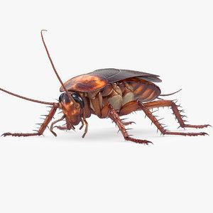 cockroach american 3D model