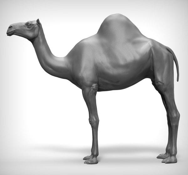 camel realistic 3D