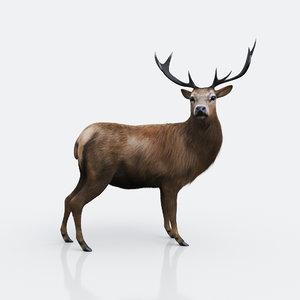 forest deer 3D model