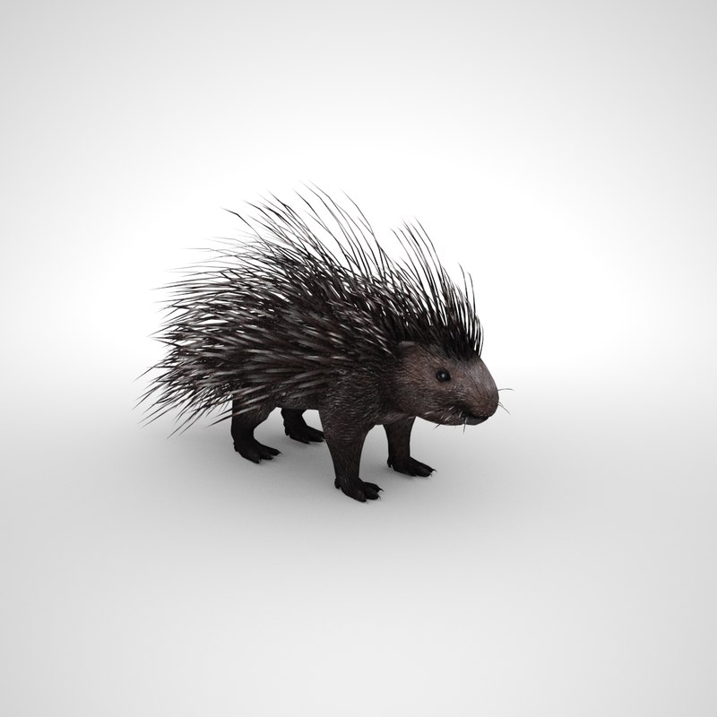 porcupine model