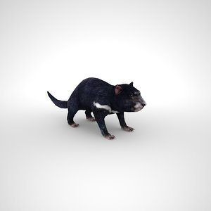 3D devil tasmanian