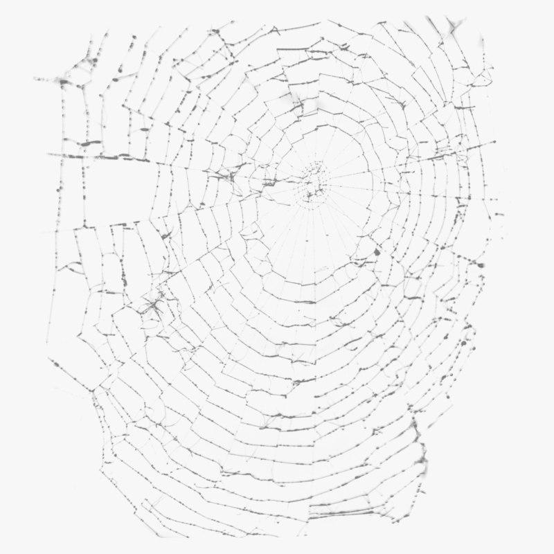 3D spider web spiderweb