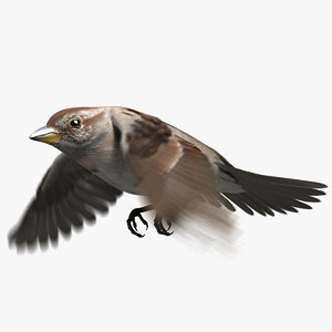 american tree sparrow animation 3D model
