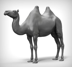 3D model camel realistic