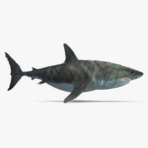 3D megalodon shark