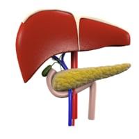 3D model realistic organs liver