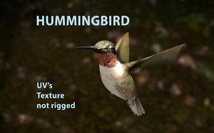 3D bird hummingbird model