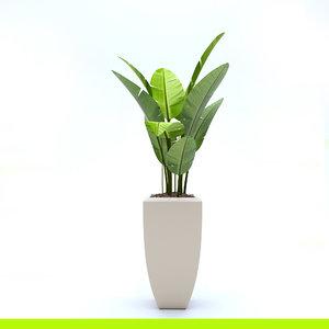 ficus plant tree model