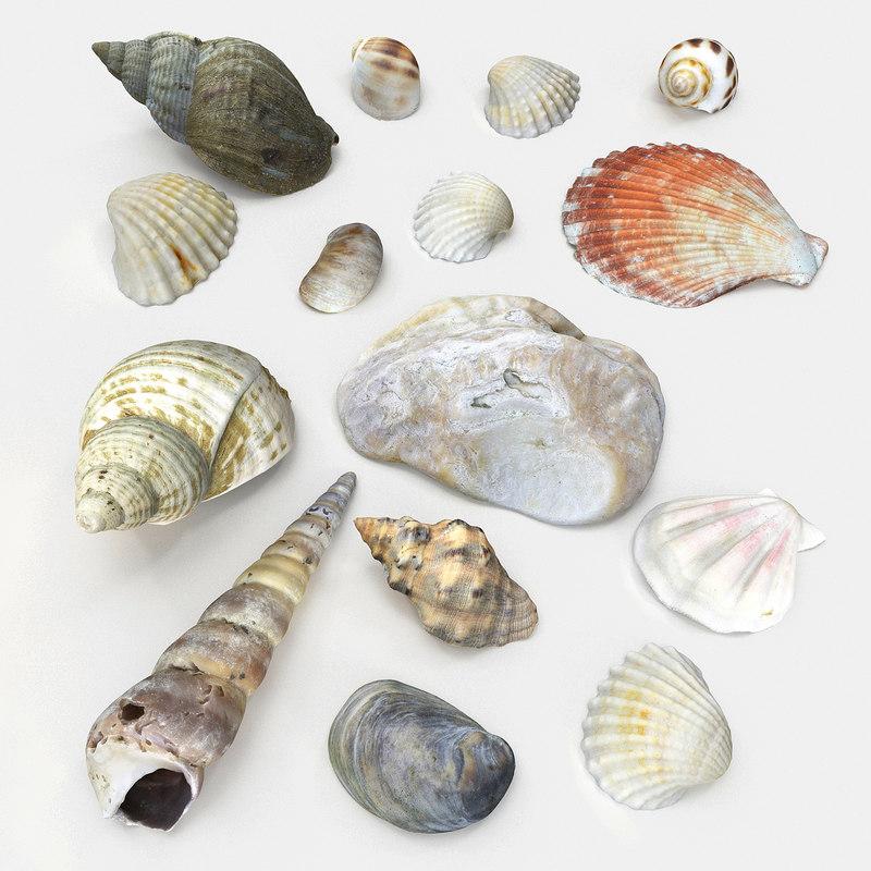 3D seashell sea shell